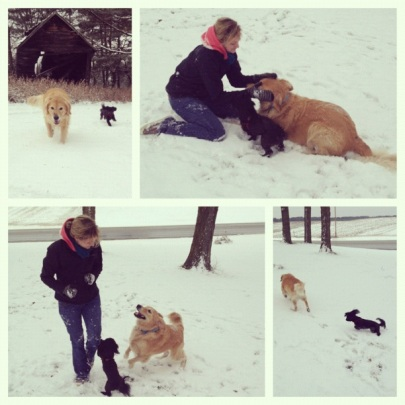 Robin and puppies play with snow.