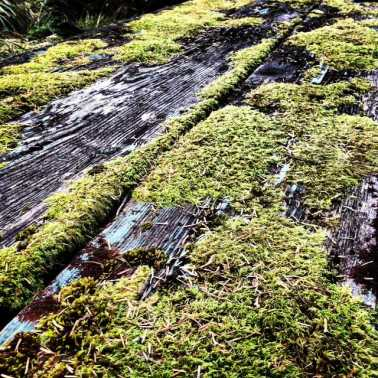 Nature wins. Who needs art when we have moss.
